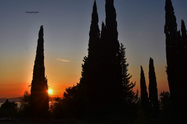 View between the cypresses to the sunset in Zivogosne , Dalmatia ,