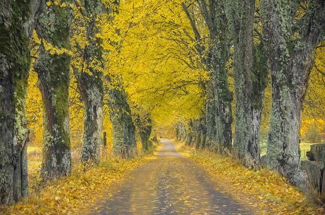 Autumn in Vestby, Norway