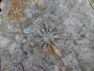 Bracken Star