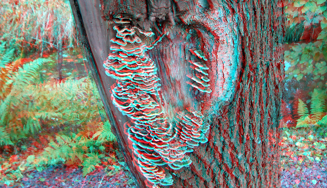 Fungus Oosterflank Rotterdam 3D