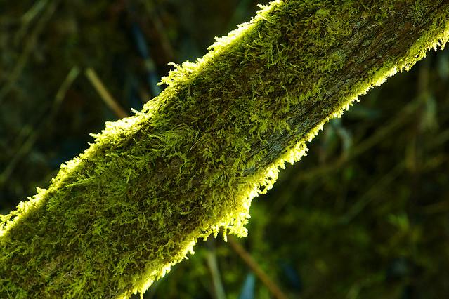 Moss Light Macro