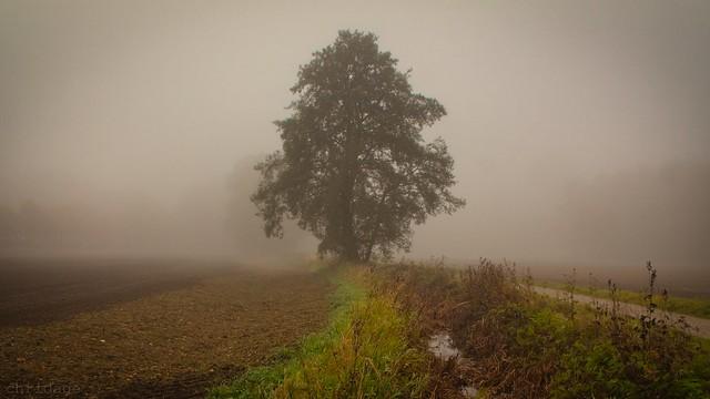 Herbstlandschaft 😀 München Lochhausen 3