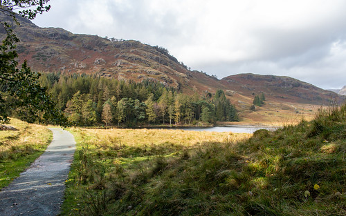 lakedistrict nationalpark tarn water path tree forest mountain landscape grass sky cumbria