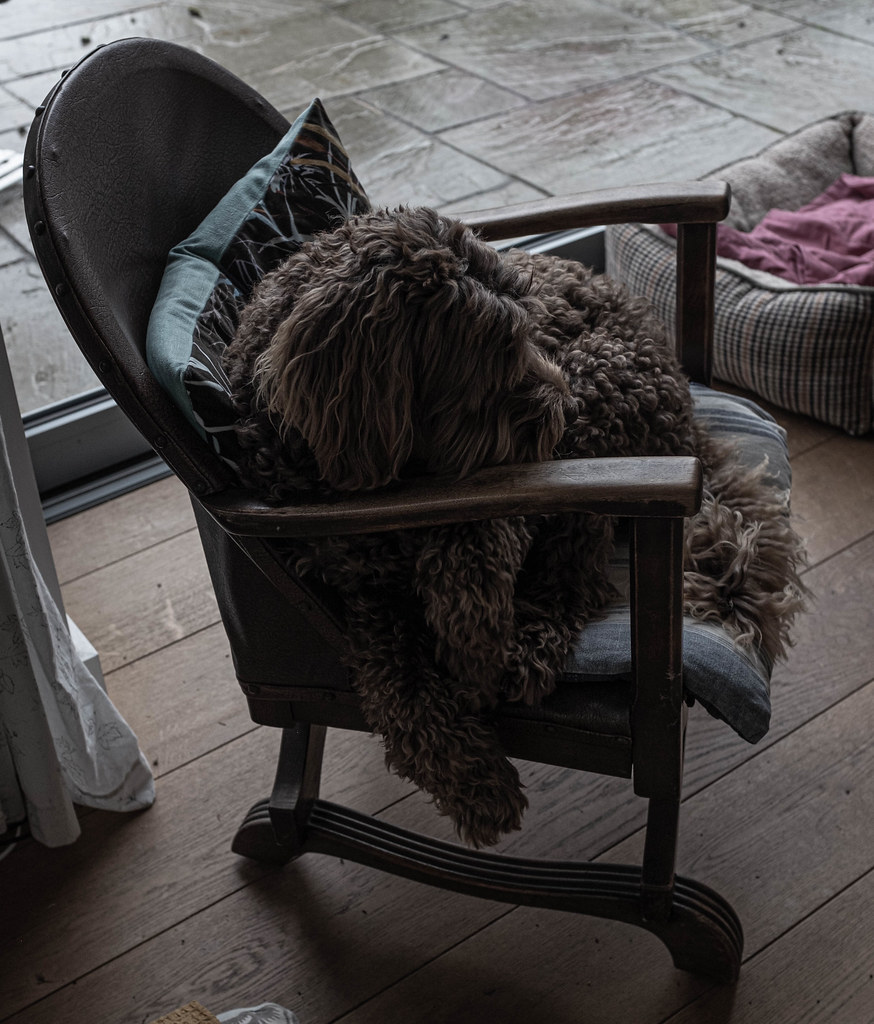Snoozing Chair