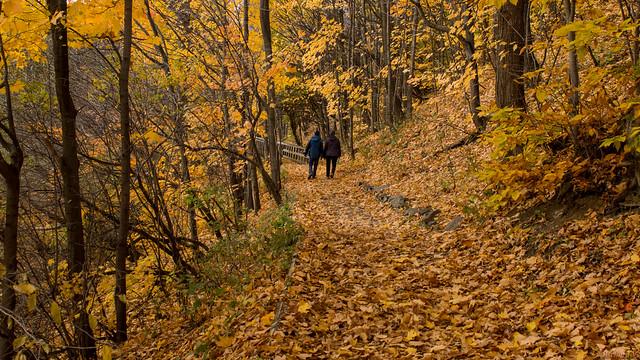 Automne, autumn - Marche, walk, Parc Chauveau - Québec, Canada - 4912