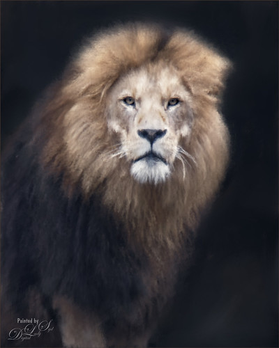 Image of a painted male lion