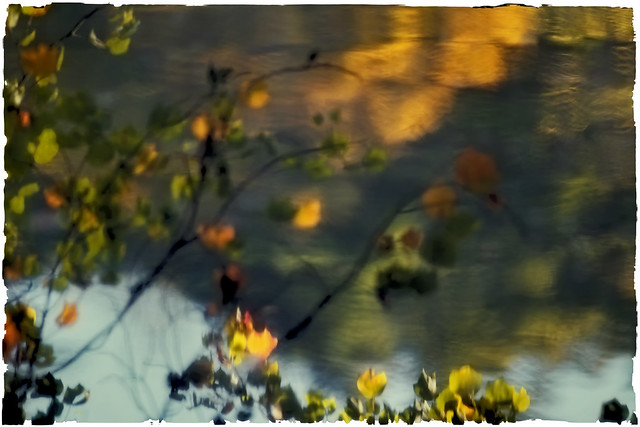 Reflections on Bass Pond.