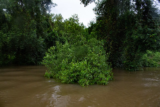 Adelaide River after heavy monsoon