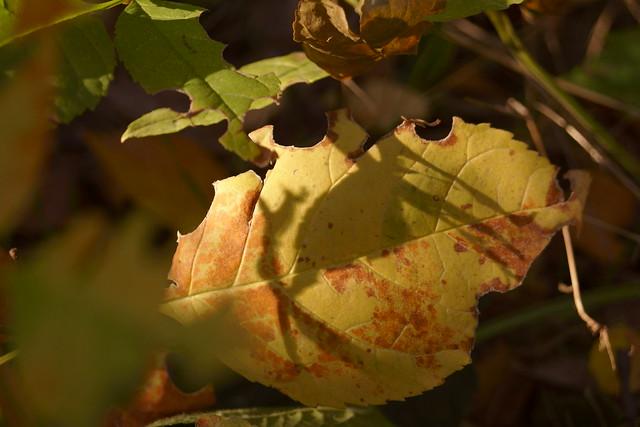 Осенние зарисовки / Autumn sketches