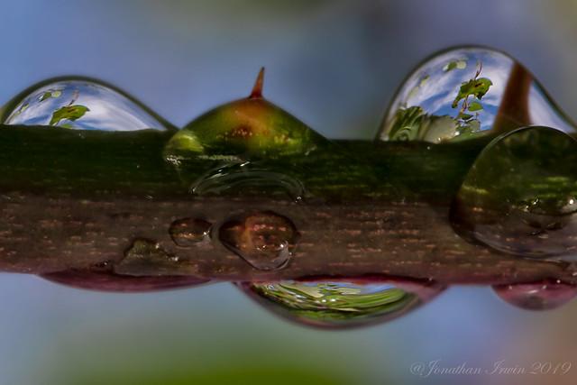 Raindrop Reflections_E5A7630