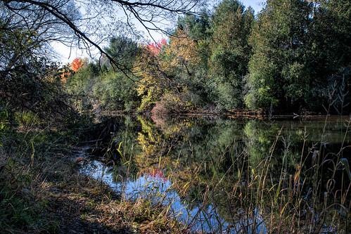Speed River Autumn