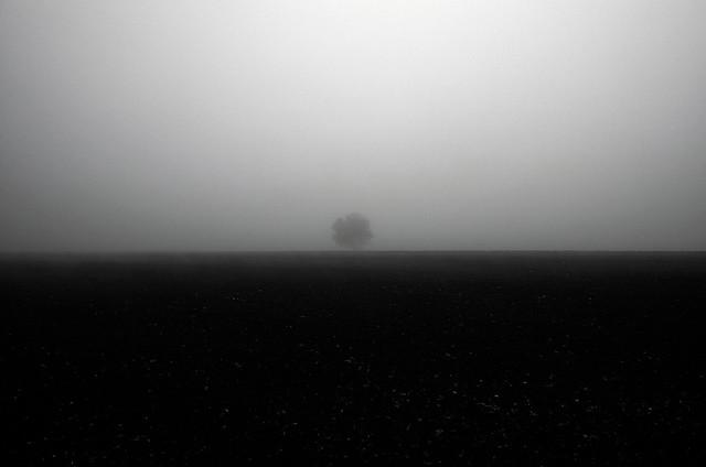 landscape .