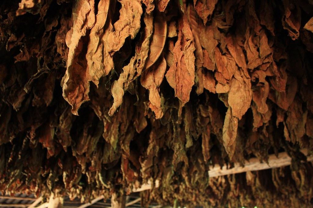 tobacco-3595483_1920