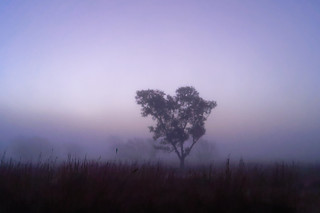 Misty trees, just before the rise