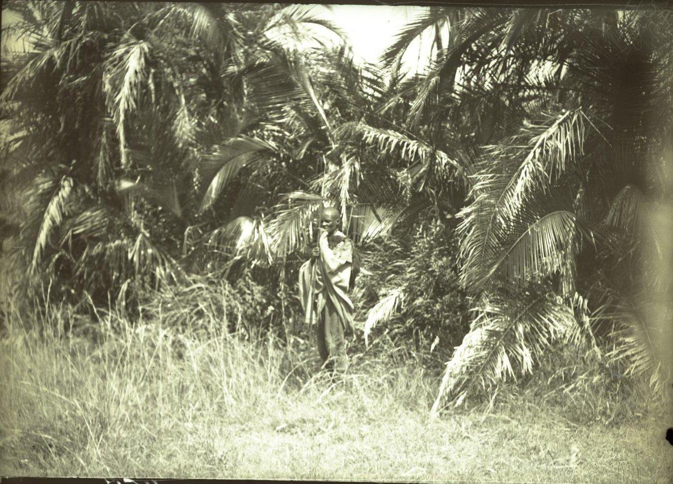457. Пальмовый лесок