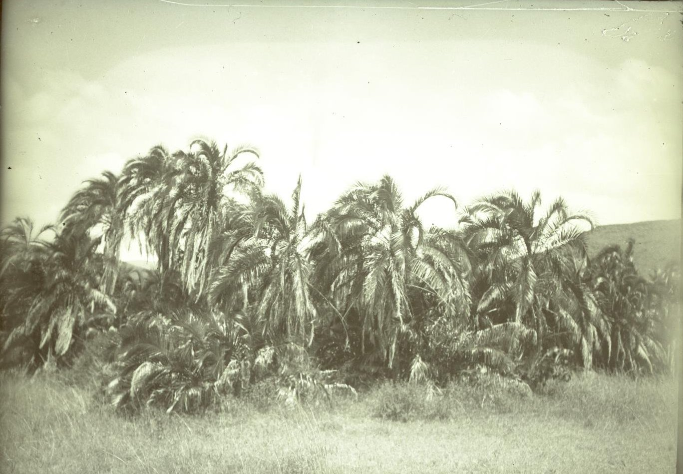 459. Район Марокко до Урбарака. Пальмовый лесок