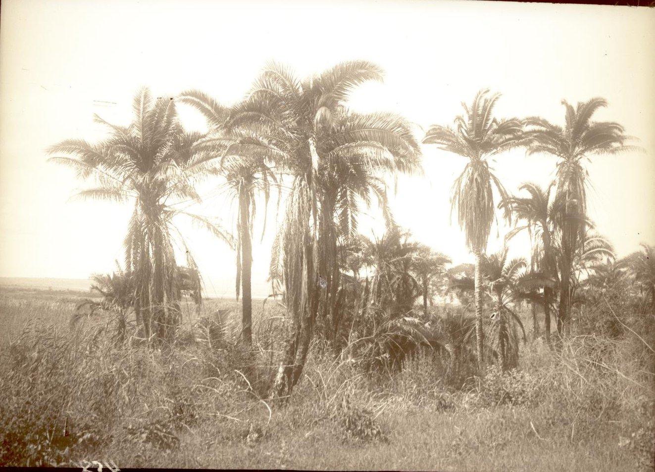 458. Район Марокко до Урбарака. Пальмовый лесок