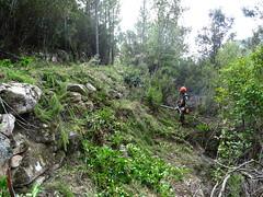 Débroussaillage du chemin annexe du Carciara : on retrouve les soutènements