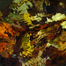 Fallen leaves in bright autumn colours under water