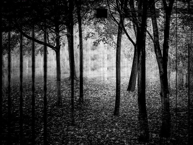 forest 201019