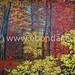 Autumn Forest @ http://ebondar.com/portfolio-item/autumn-forest/