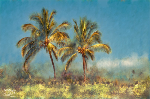 Image of two Palm Trees on the Big Island in Hawaii