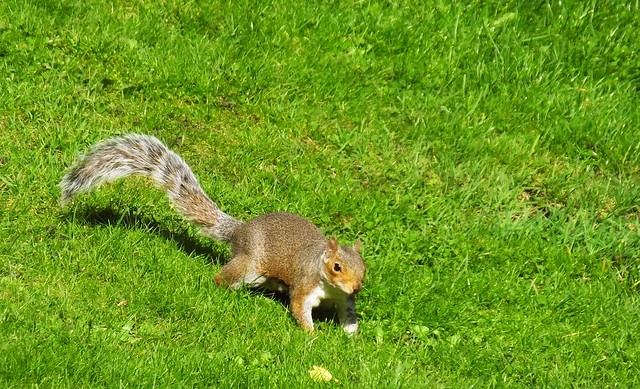 Foraging Squirrel 02