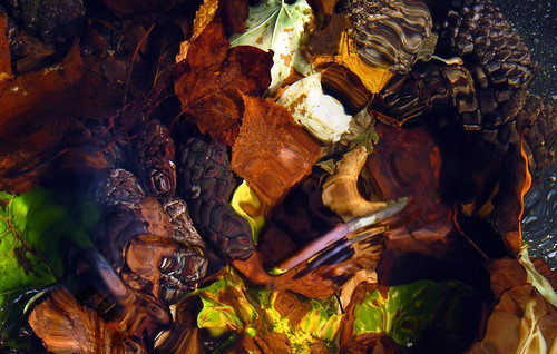 Fallen leaves in bright autumn colours and and pine cones under water