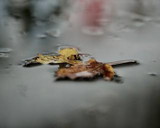 A rainy fall day