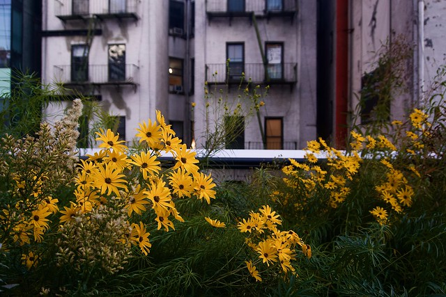 Curious (yellow)  - The High Line, New York City