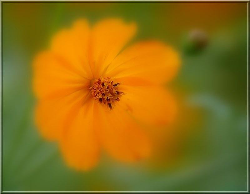 Au jardin des plantes. - Page 7 48931812518_864192f2e6_c