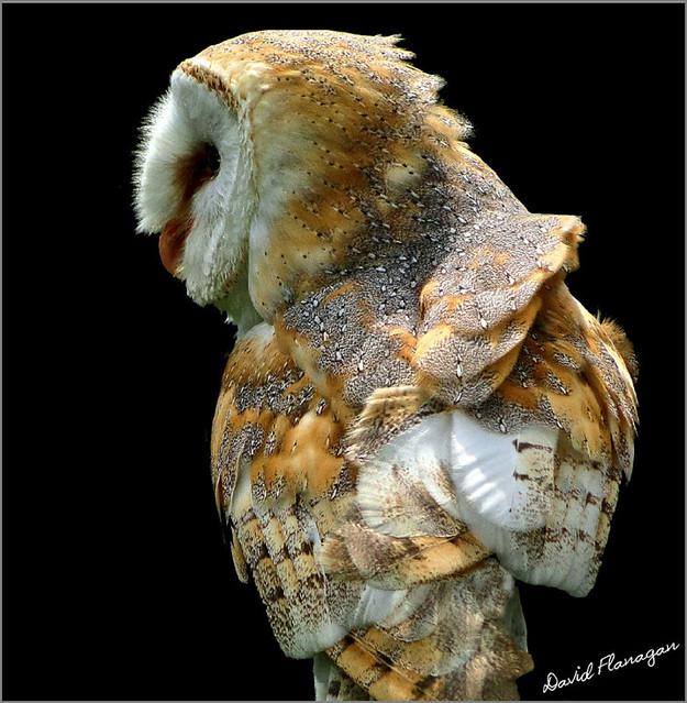 Owl - A popular photo shown again.