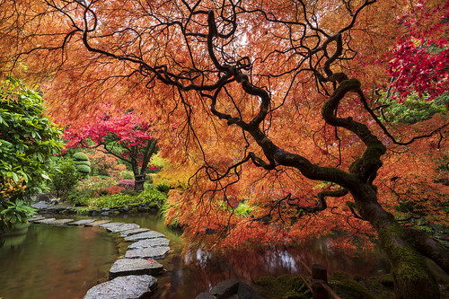 butchartgardens saanich saanichton vancouverisland victoriabc bc britishcolumbia canada sony sonya7r3 sony1635f28gm rain autumn tree trees pond japanesegardens green orange landscape landscapephotography stone trail