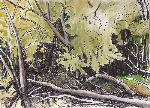 Woods along backwater pond