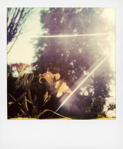 Sun, trees, flower ...