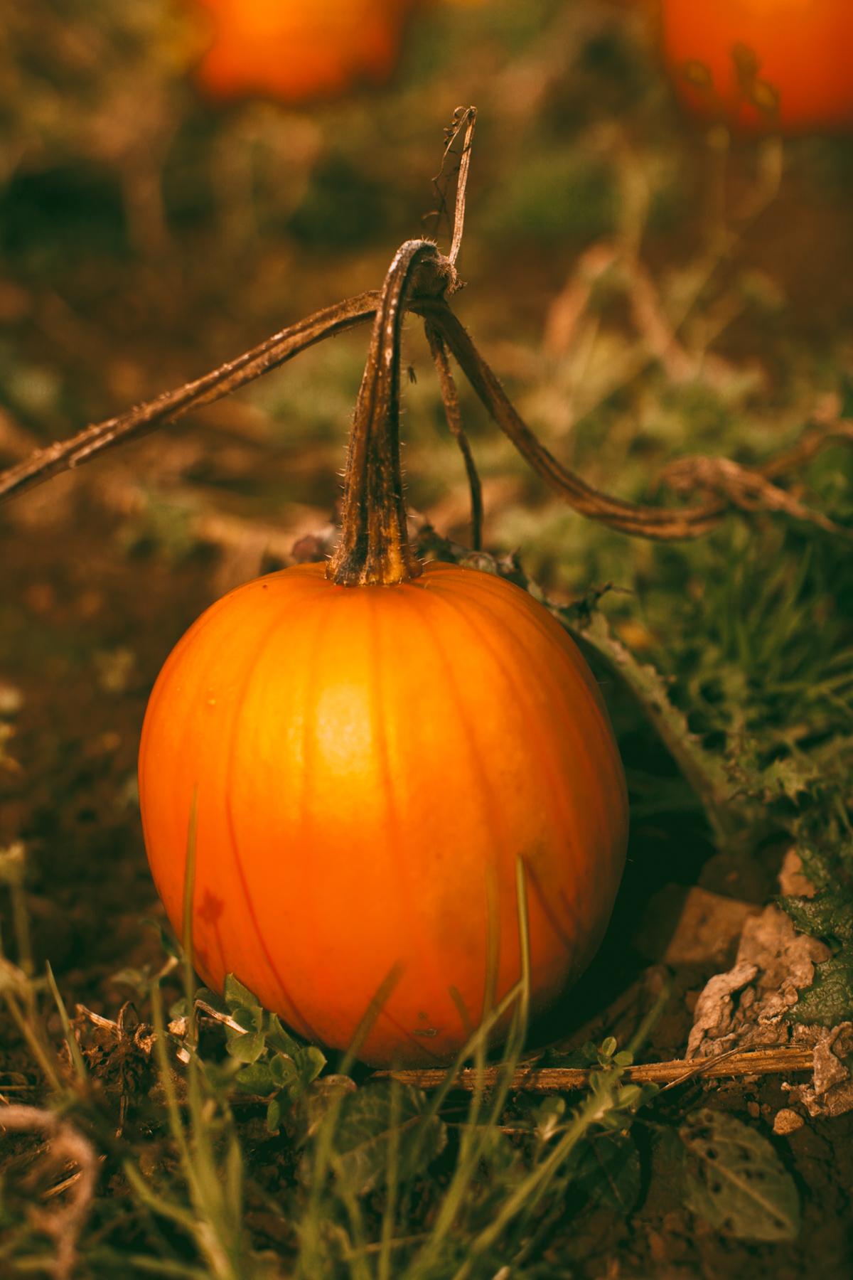 pumpkins-17