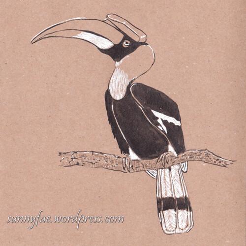16 hornbill