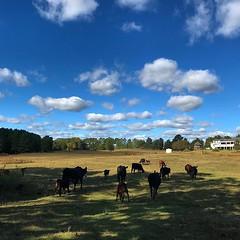 #knowyourfarmer #familyfarm #justaddgrass #grassfarm #triplejfarmsc #eatlocal #food #Fall