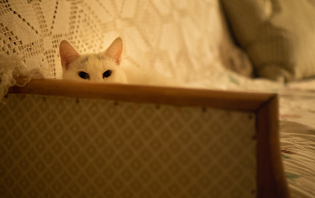 It´s a cats life (2): Hide and seek