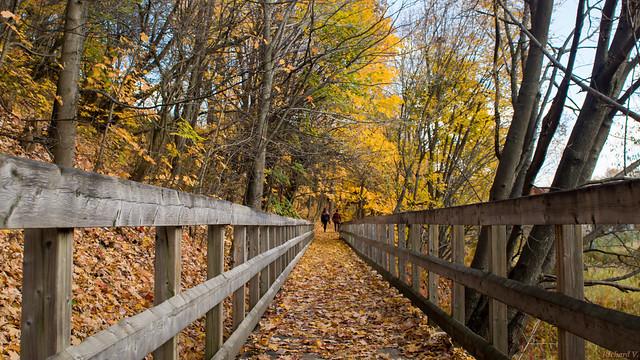 Automne, autumn - Parc Chauveau - Québec, Canada - 4920
