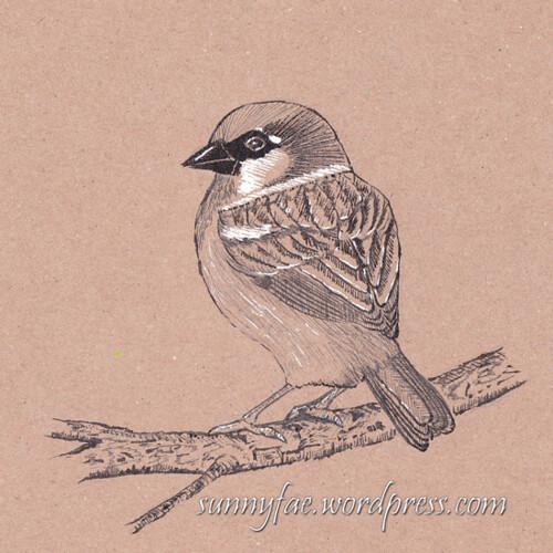19 little sparrow