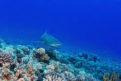 shark2Oct1-19