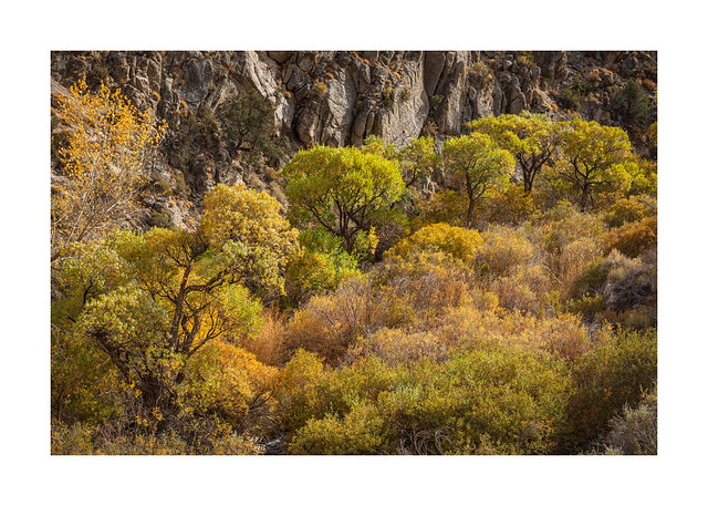 March of the Cottonwoods
