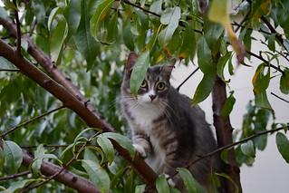 Michi's  Tree Adventures Take Three