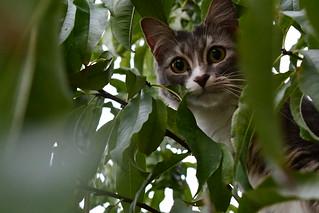 Michi's Tree Adventures Take One