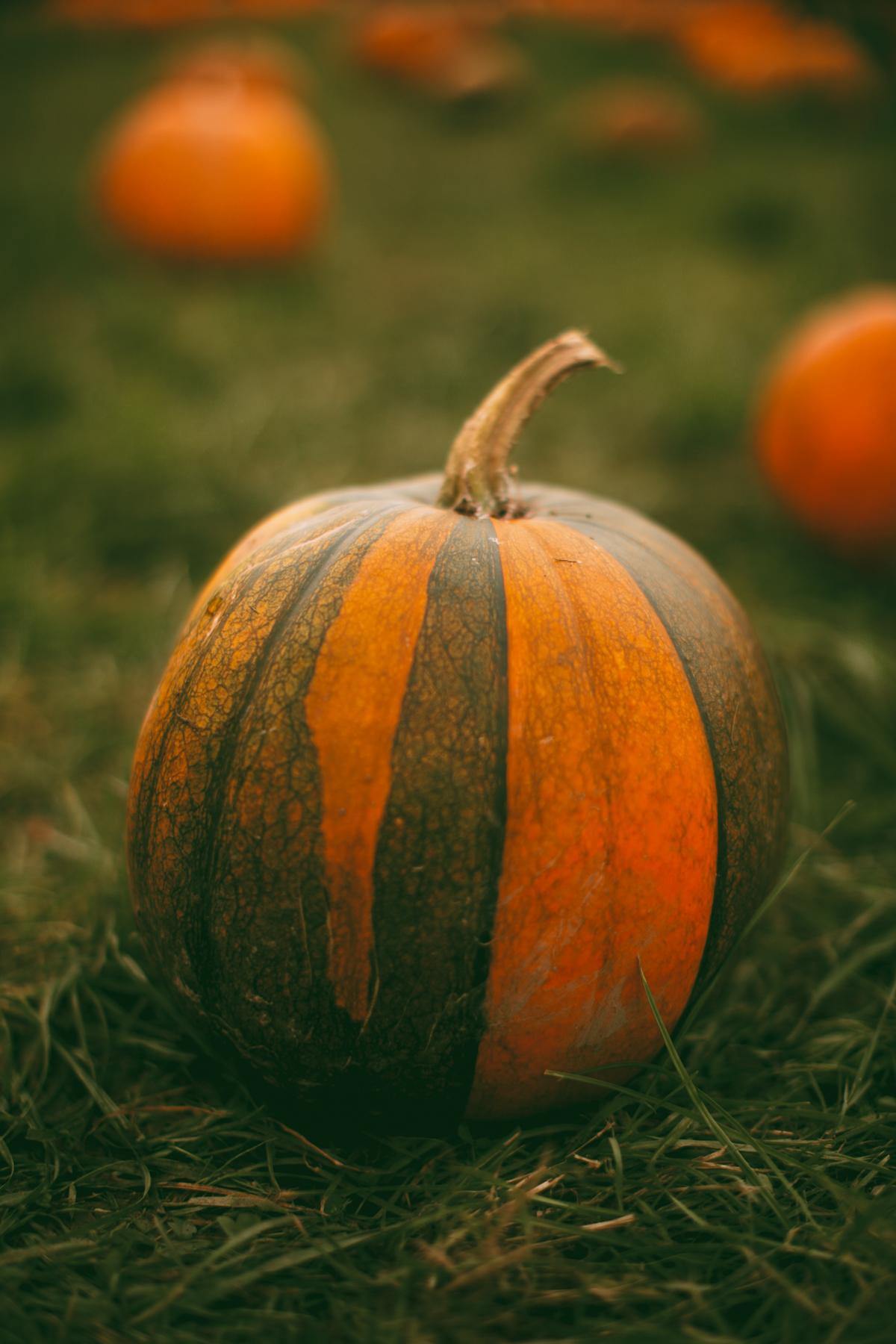 pumpkins-32