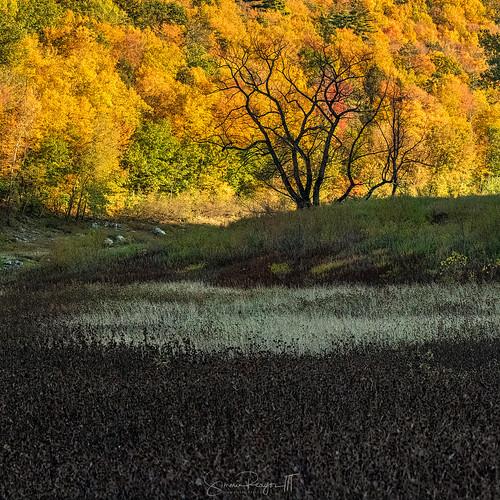 2019 autumn colebrook colors connecticutphotographer d750 fall fallcolor landscapephotographer nature naturephotographer nikon october colebrookdamreservoir colebrookriverlake digital sandisfield massachusetts unitedstatesofamerica