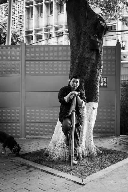 The man, the bamboo, the tree and the dog