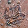 Future fossil, Lower Economy, Nova Scotia by Small Creatures