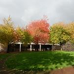 Autumn trees in Preston